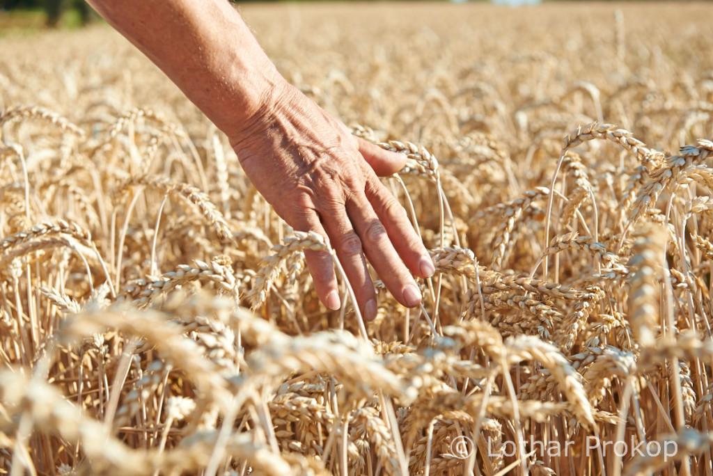 6 Getreide Hand
